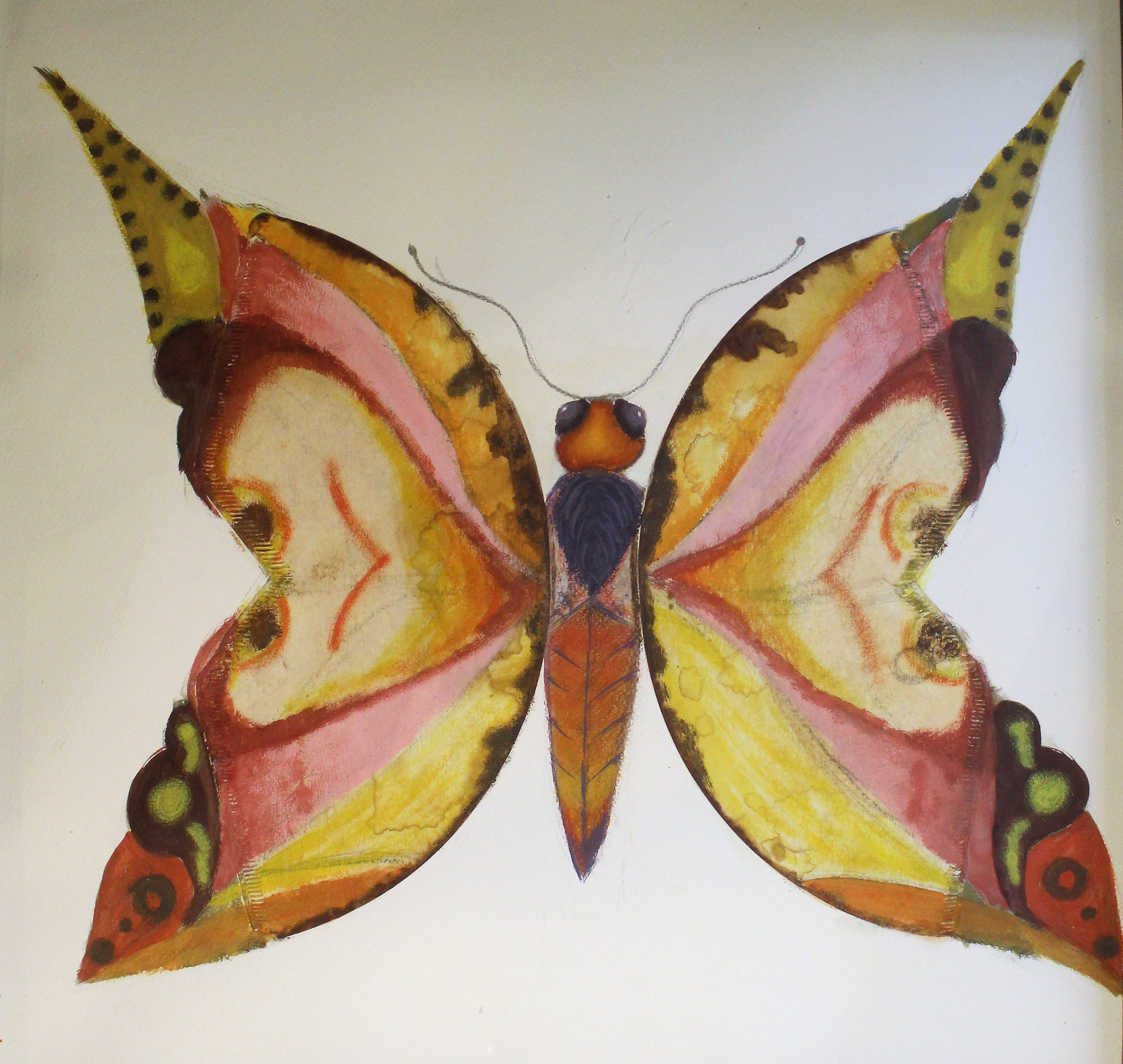 Papillons café
